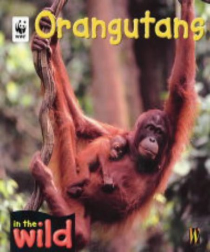 9780750242325: In The Wild: Orangutangs