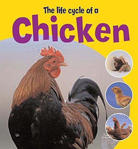 9780750258746: The Life Cycle of a Chicken (Learning About Life Cycles)