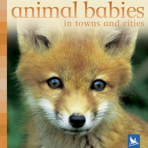 9780753411087: Animal Babies in Towns and Cities