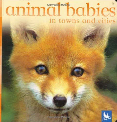 Animal Babies in Towns and Cities (Animal Babies)