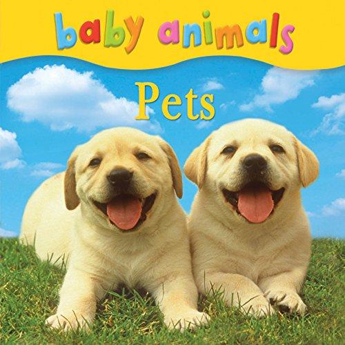 Baby Animals: Pets: Kingfisher