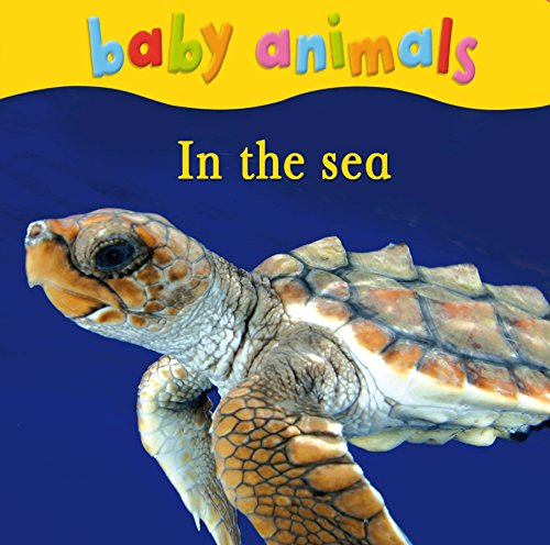 9780753432495: Baby Animals: In the Sea