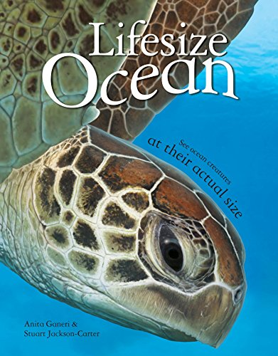 Lifesize Ocean: NA