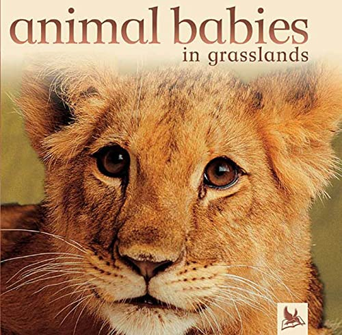 9780753457894: Animal Babies in Grasslands