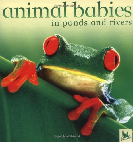 9780753457900: Animal Babies in Ponds and Rivers