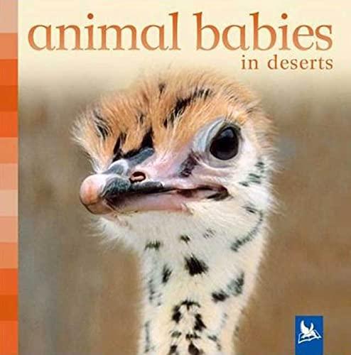 Animal Babies in Deserts: Nicholson, Sue