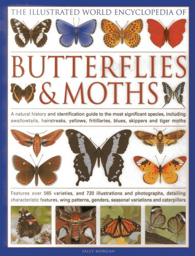 9780754818847: The Illustrated World Encyclopedia of Butterflies and Moths: A Natural History and Identification Guide