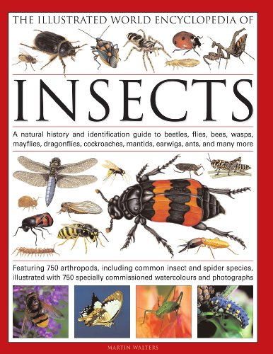 9780754819097: The Illustrated World Encyclopedia of Insects: A Natural History and Identification Guide to Beetles, Flies, Bees, wasps, Springtails, Mayflies, ... Crickets, Bugs, Grasshoppers, Fleas, Spide
