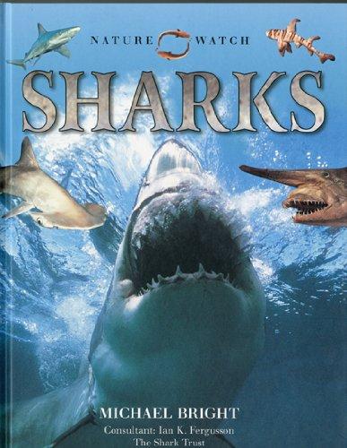 9780754819400: Nature Watch: Sharks (Nature Watch (Lorenz))