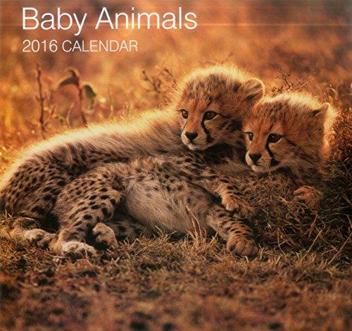 9780754831013: 2016 Calendar: Baby Animals (Calendars 2016)