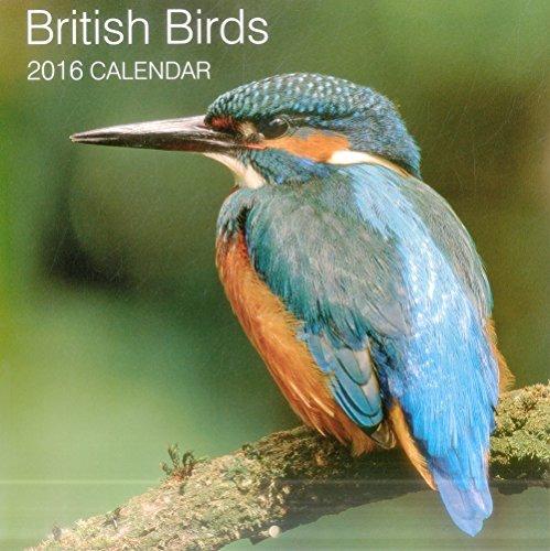 9780754831037: 2016 Calendar: British Birds (Calendars 2016)