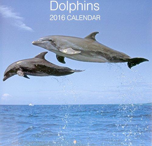 9780754831068: 2016 Calendar: Dolphins (Calendars 2016)