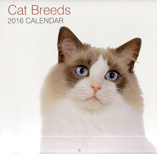 9780754831105: 2016 Calendar: Cat Breeds (Calendars 2016)