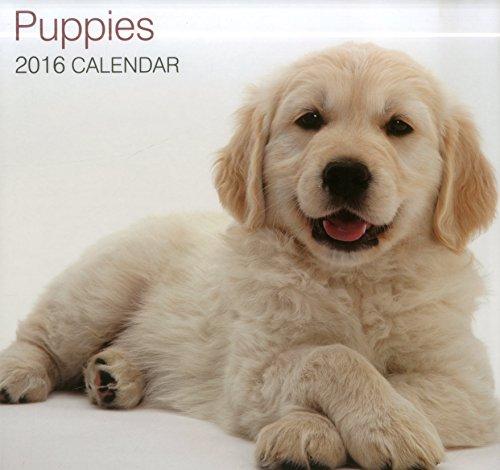 9780754831242: Puppies 2016 Calendar