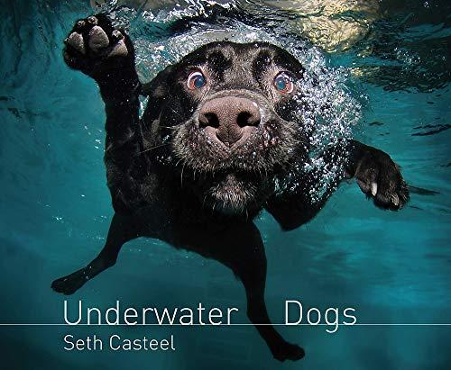 9780755364114: Underwater Dogs