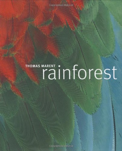 9780756619404: Rainforest