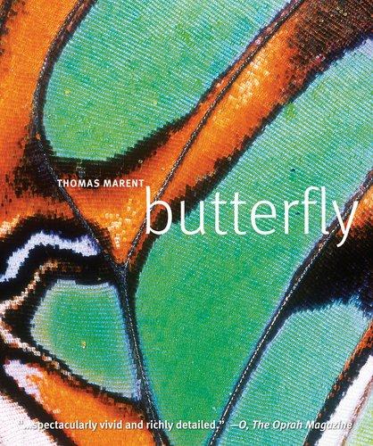 9780756667290: Butterfly
