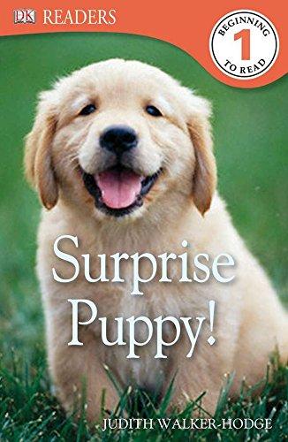 DK Readers L1: Surprise Puppy: Hodge, Judith