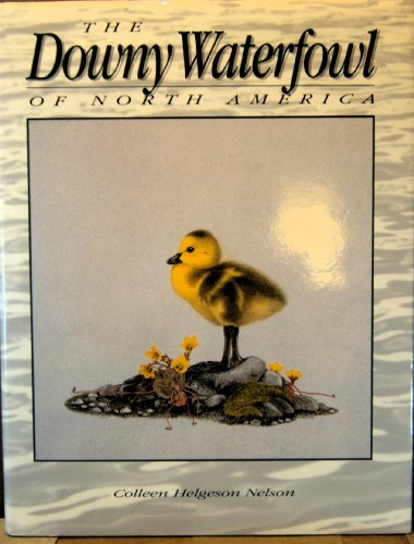 9780756784904: Downy Waterfowl of North America