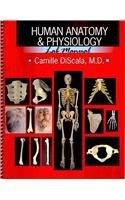 9780757560408: Human Anatomy and Physiology Lab Manual