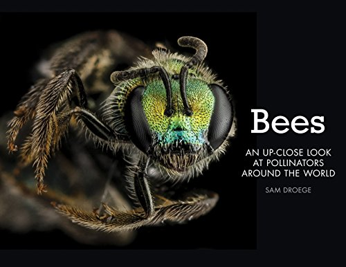 9780760347386: Bees: An Up-Close Look at Pollinators Around the World