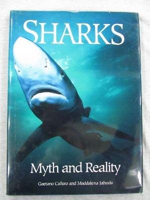 Sharks: Cafiero, Jahoda