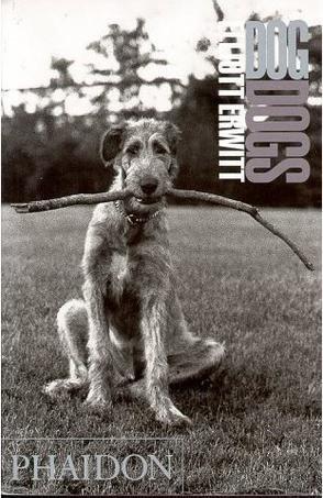 9780760723036: Dog Dogs