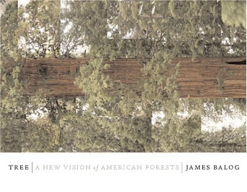 9780760762165: Tree: A New Vision of the American Forest