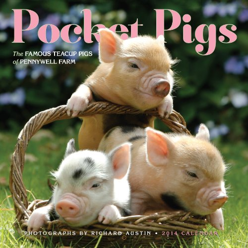 9780761174530: Pocket Pigs 2014 Wall Calendar: The Famous Teacup Pigs of Pennywell Farm