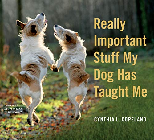 9780761181798: Really Important Stuff My Dog Has Taught Me