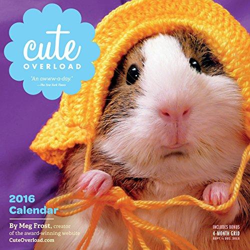 9780761183211: Cute Overload Wall Calendar 2016 (2016 Calendar)