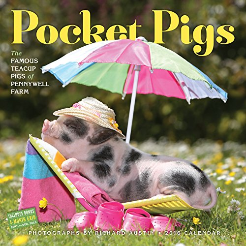 9780761183280: Pocket Pigs Wall Calendar 2016 (2016 Calendar)