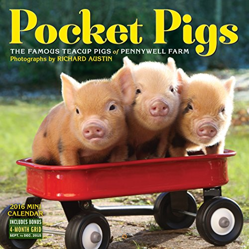 9780761184928: Pocket Pigs Mini Wall Calendar 2016 (2016 Calendar)
