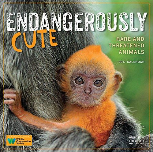 Endangerously Cute Wall Calendar 2017