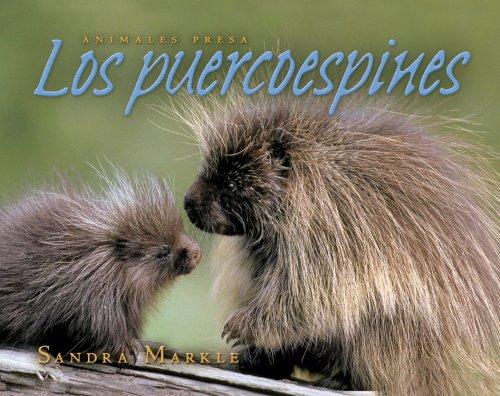 9780761339007: Los puercoespines / Porcupines (Animales Presa / Animal Prey)