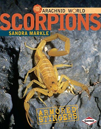9780761350378: Scorpions: Armored Stingers (Arachnid World)