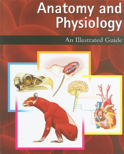 Anatomy and Physiology: An Illustrated Guide