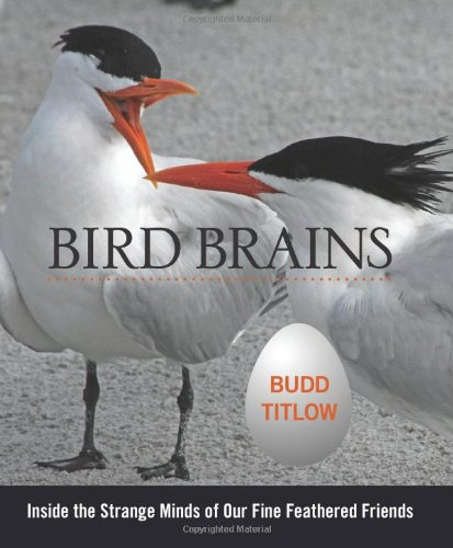 Bird Brains: Inside The Strange Minds Of Our Fine Feathered Friends: Budd Titlow