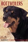 Cal 99 Rottweilers