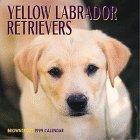 9780763113674: Cal 99 Yellow Labrador Retrievers Calendar