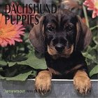 Cal 99 Dachshund Puppies: Browntrout Publishers