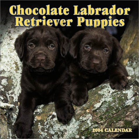 9780763169244: Chocolate Labrador Retriever Puppies 2004 Calendar