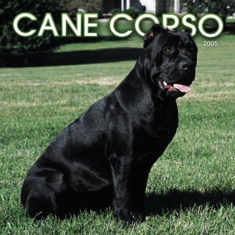 9780763172404: Cane Corso 2005 Calendar