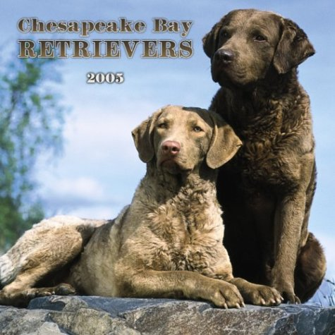 9780763175252: Chesapeake Bay Retrievers 2005 Calendar