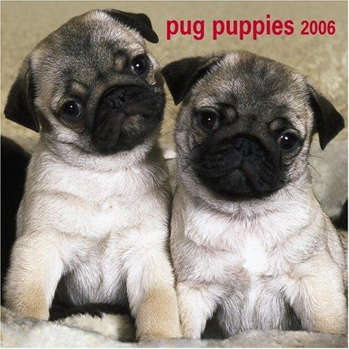 9780763190262: Pug Puppies 2006 Calendar