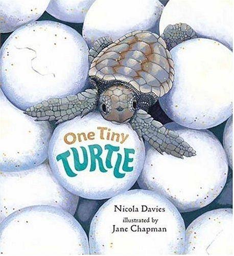 9780763615499: One Tiny Turtle