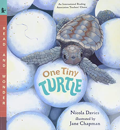 9780763623111: One Tiny Turtle: Read and Wonder