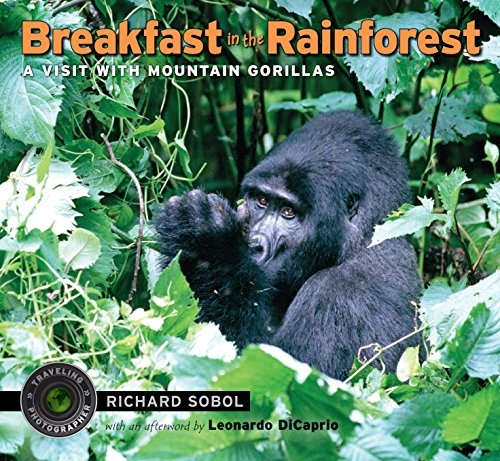 9780763651343: Breakfast in the Rainforest: A Visit with Mountain Gorillas (Traveling Photographer)