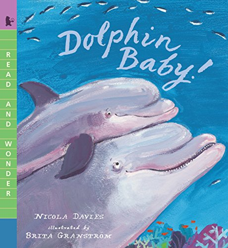 9780763670481: Dolphin Baby! (Read and Wonder)
