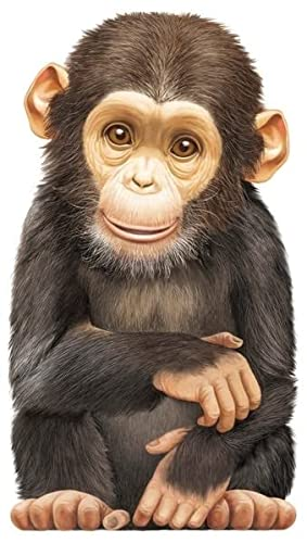 Look At Me: Little Chimp